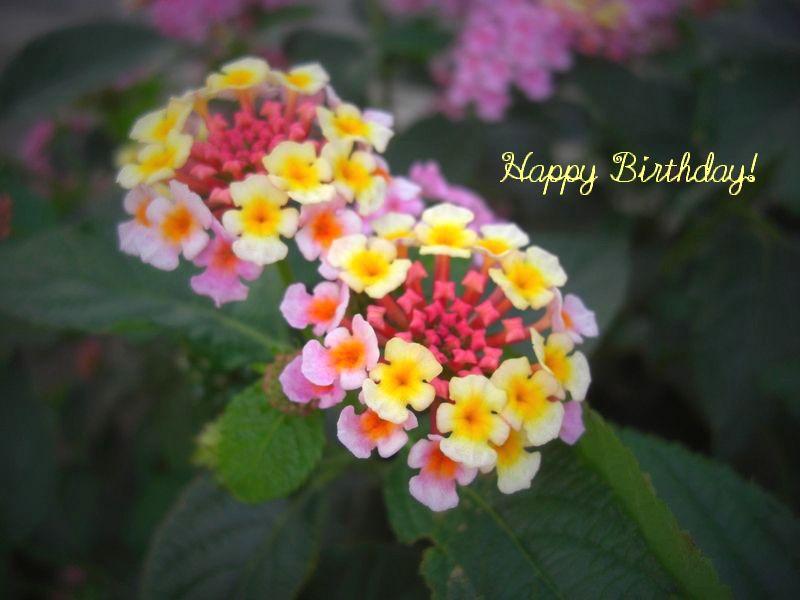 6月30日生まれの皆さん、お誕生...