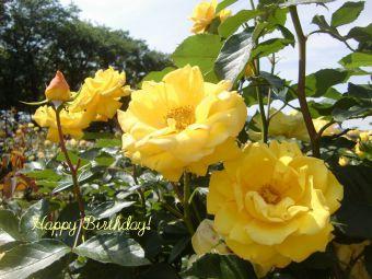 5月31日生まれの皆さん、お誕生日おめでとう!