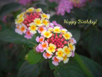 6月30日生まれの皆さん、お誕生日おめでとう!
