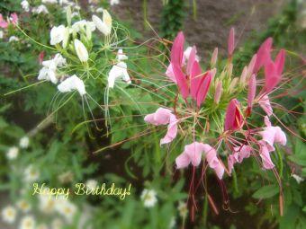 7月30日生まれの皆さん、お誕生日おめでとう!