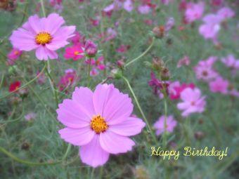 11月1日生まれの皆さん、お誕生日おめでとう!