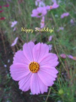 11月9日生まれの皆さん、お誕生日おめでとう!