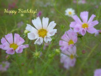 11月10日生まれの皆さん、お誕生日おめでとう!