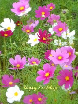 11月28日生まれの皆さん、お誕生日おめでとう!