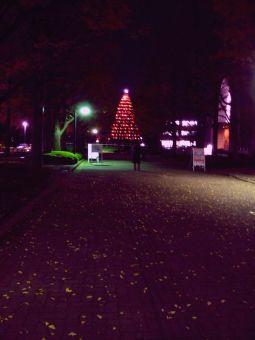 青山学院のクリスマスツリー01