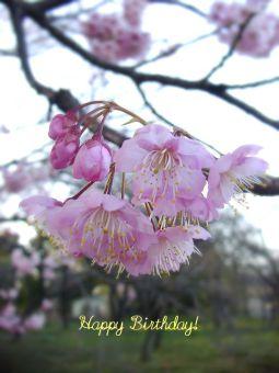 2月27日生まれの皆さん、お誕生日おめでとう!
