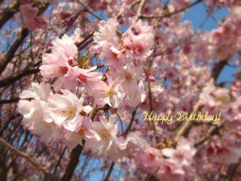 3月14日生まれの皆さん、お誕生日おめでとう!
