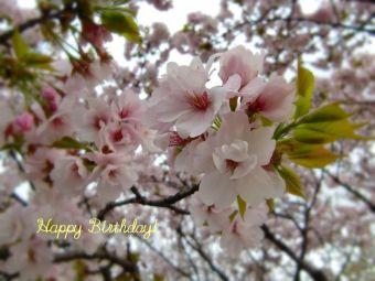 3月17日生まれの皆さん、お誕生日おめでとう!