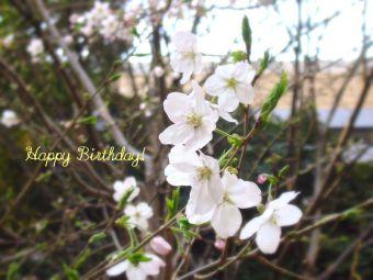 3月21日生まれの皆さん、お誕生日おめでとう!