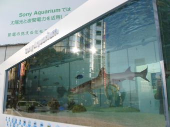 45th_Sony_Aquarium_01