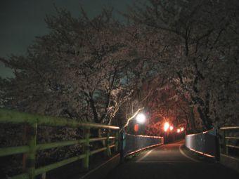 吉見町さくら堤公園