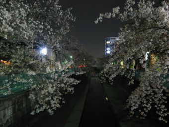 緑川(イオンモール川口前川西側)