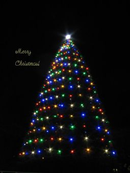 青山学院クリスマスツリー.jpg