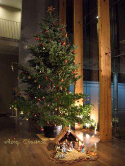 青山学院初等部米山記念礼拝堂クリスマスツリー