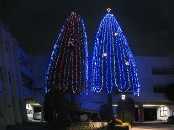 立教小学校のクリスマスツリー.jpg