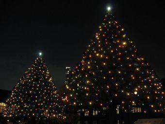 立教大学池袋キャンパスのクリスマスツリー.jpg