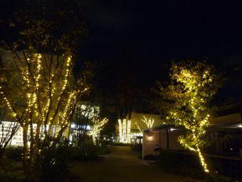 代官山 T-SITE ガーデン☆IVY PLACE付近