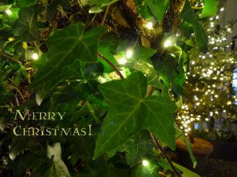 クリスマスカード(ル・アンジェ教会 アイビー)640x480
