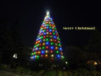 クリスマスカード(青学青山)1024x768