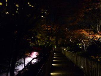 椿山荘『森のオーロラ』01